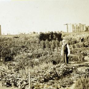 1919 Abundant Fields