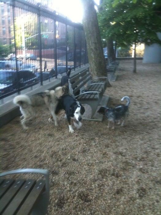 dog run2