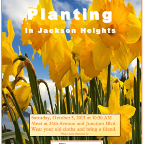 Daffodil Planting in Jackson Heights