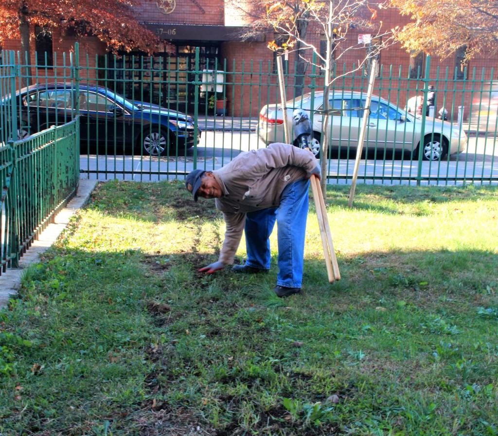 Rafael planting tulip and Daffodil bulbs